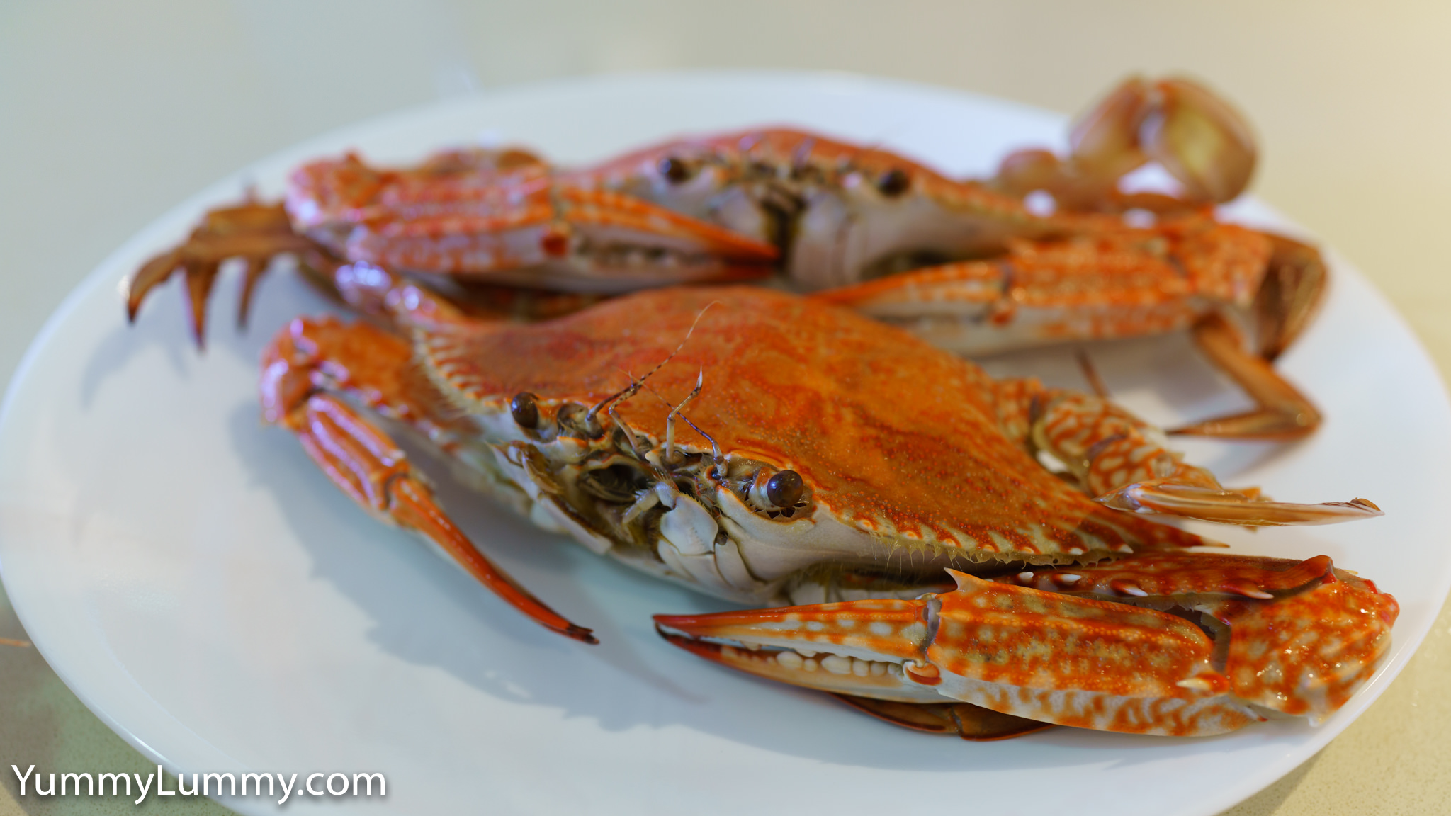 Fresh blue swimmer crabs (sand crabs) purchased from Morgan's Seafood. Gary Lum.