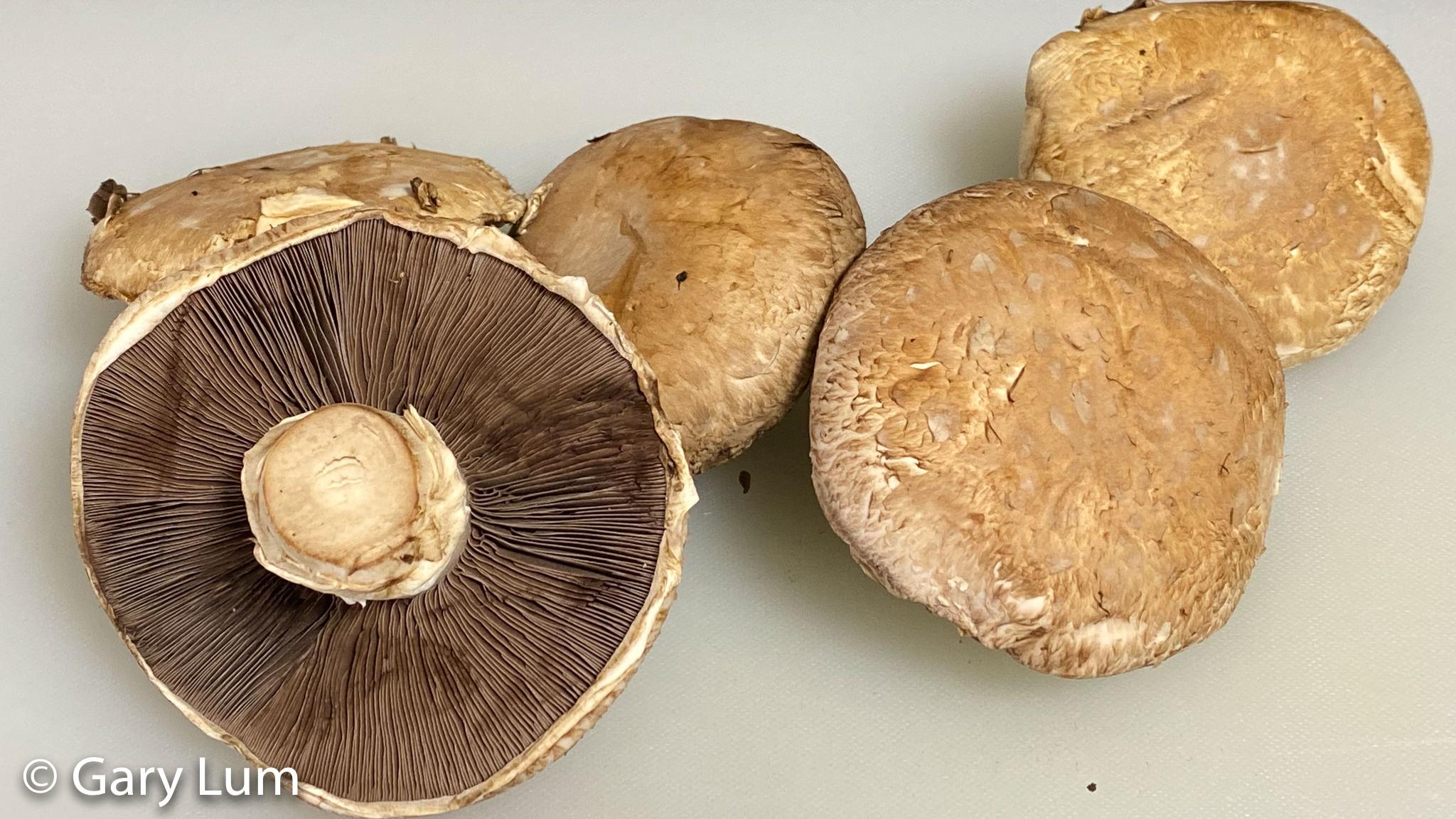 Mushrooms ready for sautéing. Gary Lum.